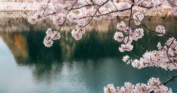 Quelle est la meilleur période pour partir au Japon ?